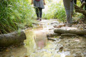 A passo d'uomo - camminate - Nelle selve del Rio Montepietrino