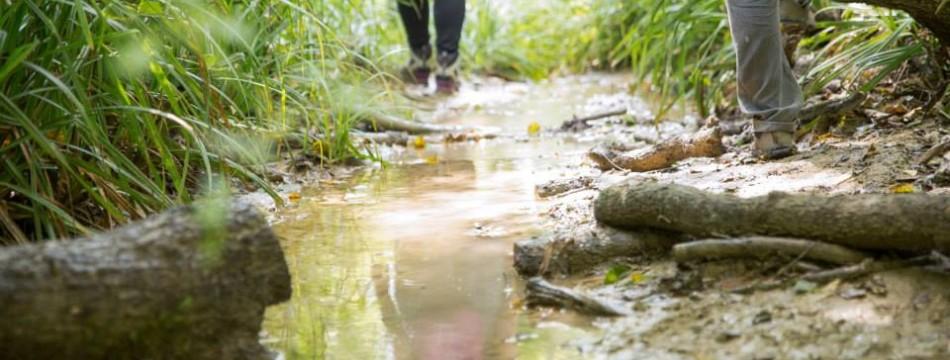 A passo d'uomo –  camminate – Nelle selve del Rio Montepietrino