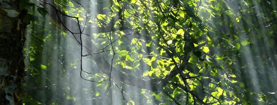 ombra-bosco